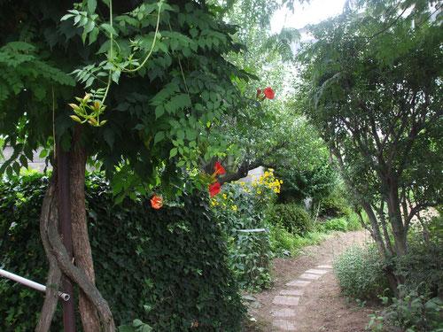 家に入る小道、草取りをしてやっときれいになりました
