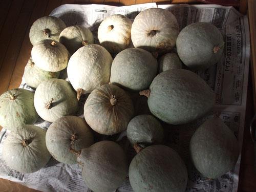 豊作の白南瓜