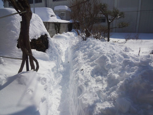 玄関前の道、1m位の積雪