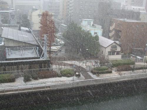 雪が積もり始めた、寒い!