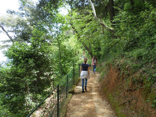 Le sentier en forêt qui surplombe la route