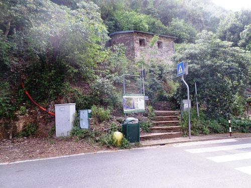 Petits escaliers pour accéder au sentier dans la forêt