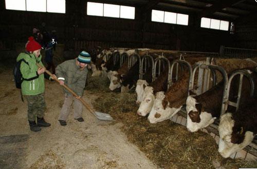 Kinder der Volksschule Rauhenebrach besuchten einen Bauernhof in Untersteinbach - und durften beim Ausmisten mit anpacken.
