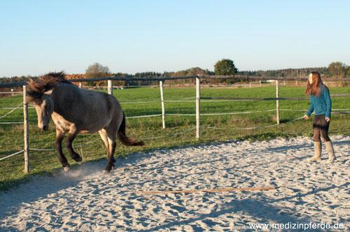 """Hier sieht man  deutlich, wie ich mich in den """"Raum"""" des Pferdes lehne. Zu viel für das sensible Pferd, es reagiert mit Ohren anlegen, und Buckeln."""