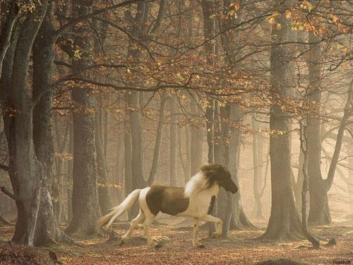Medizinpferde, EponaQuest, München, Therapie mit Pferden