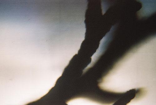 YLOP - TUNG©stephan brenn