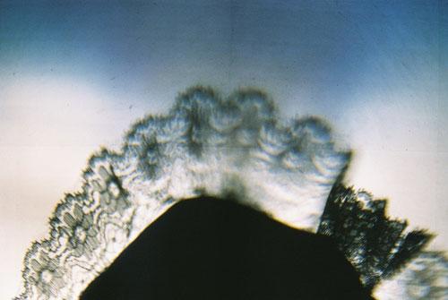 YLOP - FRIAK©stephan brenn