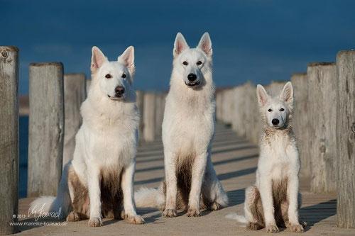 Rico, Ben und Bhumi