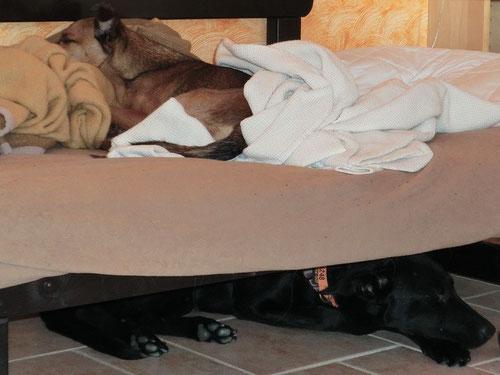 Geschickt gestapelt finden reichlich Hunde Platz zum Schlafen - Emmy auf ihrem Lieblingsplatz