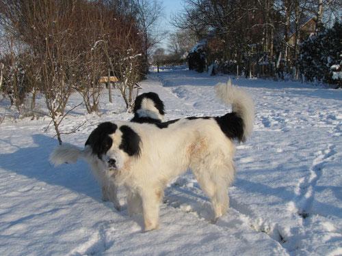 Bente & Aika im Schnee