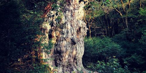 10月おすすめの縄文杉・白谷雲水峡1泊ツアー 女性一人旅でも安心の限定プラン