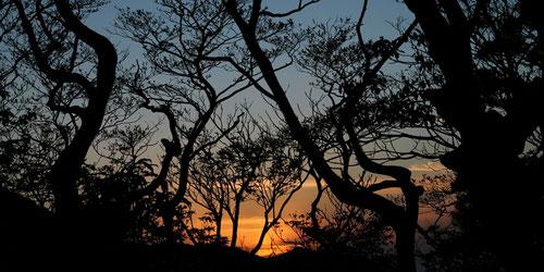 7月7日から9月27日の期間限定の縄文杉1泊ツアーは、お泊りレンタル付き!
