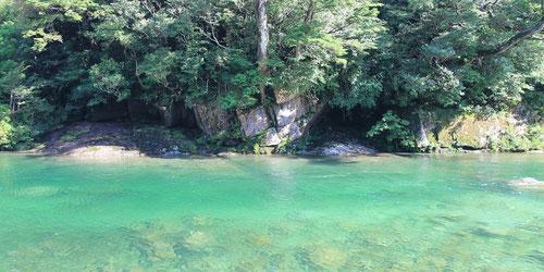 6月の縄文杉ルートは、新緑も美しく、歩きやすい季節です。