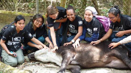 """Alumnos de Biotropical """"relajando"""" a un Tapir o Danta."""