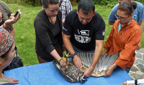 El gran experto MV Wilson F. Moreno en el curso de Manejo de Fauna y Bioseguridad en Boyacá en octubre de 2013.