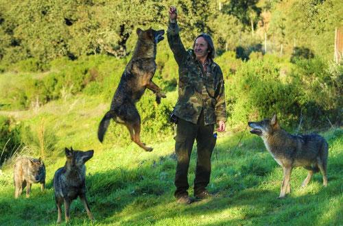 Prácticas con lobos utilizados para la sensibilización ambiental