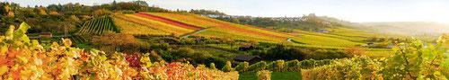 виноделие в Каталонии, винодельческие традиции Каталонии, погреба Каталонии