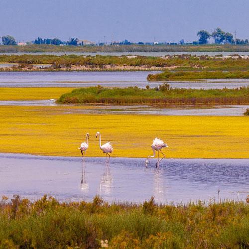 Дельта реки Эбро, экскурсии в дельту Эбро, туры в дельту Эбро