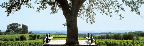 Tenuta dell' Ornellaia - Vini Della Valle