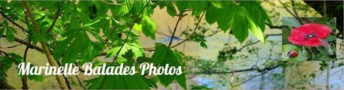 Magnifiques photos des ballades de Marinelle :  http://www.marinellebaladesphotos.fr/