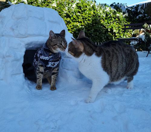 Ein Eskimokuss vor dem Katzeniglu