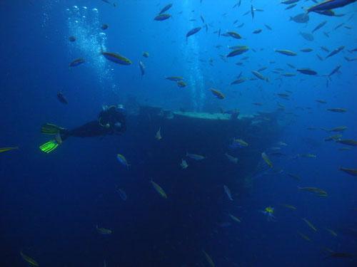 Immersione al Relitto del Thistlegorm, a largo di Sharm El Sheikh