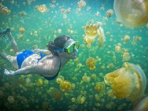 Immersione nel famoso lago delle meduse non urticanti a Kakaban - Derawan (Photo by Jonathan Lin)