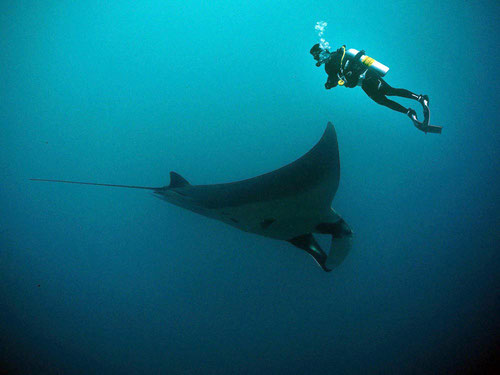 Manta in immersione a Hin Daeng (Photo by Jon Hanson)