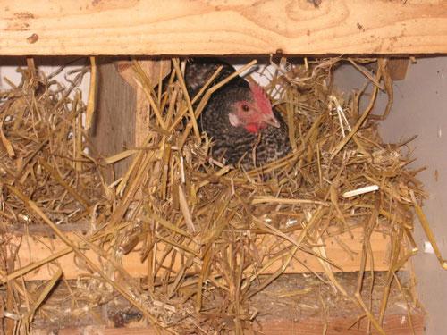 Nest auf Stroh