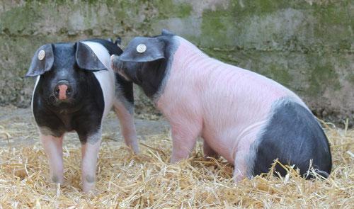 Wir sind echte Sattelschweine!