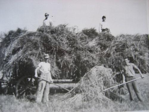 Heu-Ernte anno dunnemals (Rudlos, ca. 1950)