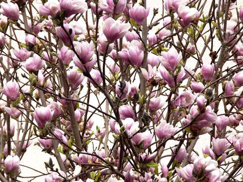 magnolien,frühlingsdeko,diy frühlingsdeko,frühlingsdeko selber machen 2020