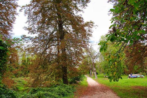 Le sentier des bords de l'Aire rive droite, avant le pont de Certoux en automne 2019. Le projet de renaturation prévoit l'abattage de la  plus grande partie des arbres