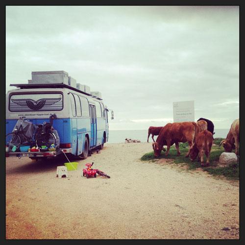 Boca do Rio, Besuch von den Kühen