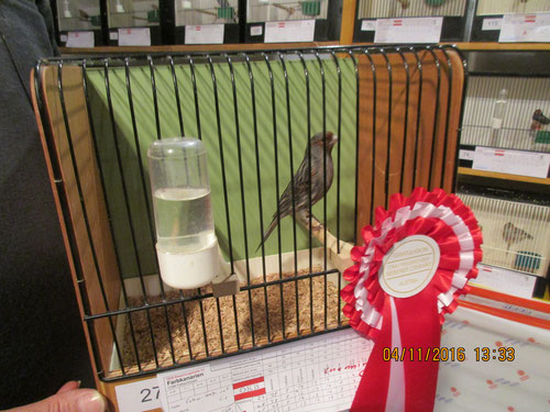 Championvogel Schwarz rot kobalt mosaik 92 Pkt.