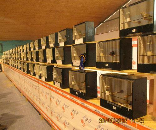 Reihe Prachtfinken