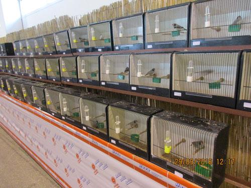Reihe Exotische Vögel