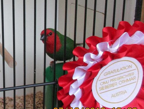 Bester der Schau > Rotköpfige PA 93 Pkt. > toller Vogel