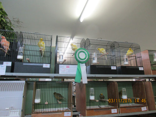 Sieger Kollektion Nordholländer mit Championvogel 93 Pkt.