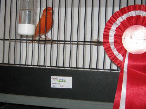 Bundessieger 2012 4er Kollek. rot schimmel 92 Pkt. ZG. Sieberer-Streb