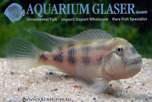 Aquarium Glaser, февраль-март Image