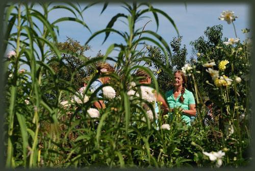 Informationen rund um den Bauerngarten und Gemüseanbau werden bei allen Führungen beantwortet.