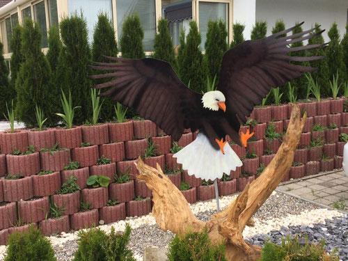Adler von vorne