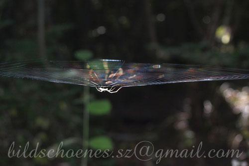 Spinnennetz im Abendsonnenschein