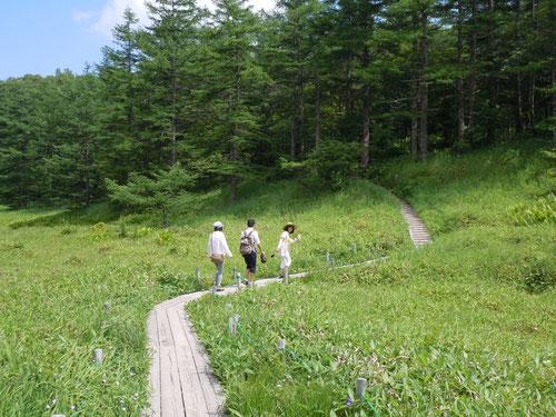 湿原を抜け、三方ヶ峰に向かう木道にて