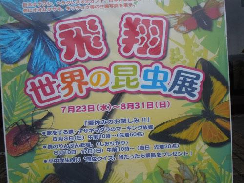 「世界の昆虫展」のポスター