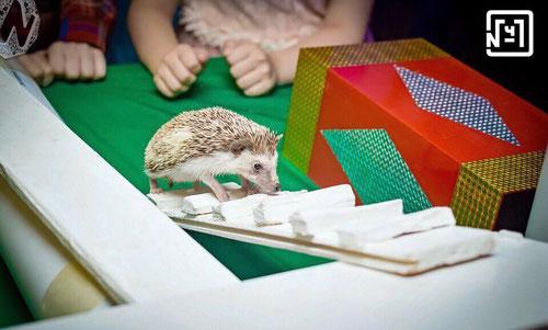выездной контактный зоопарк на день рождения москва