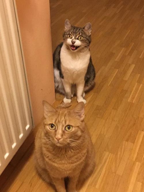 Coco und Miu