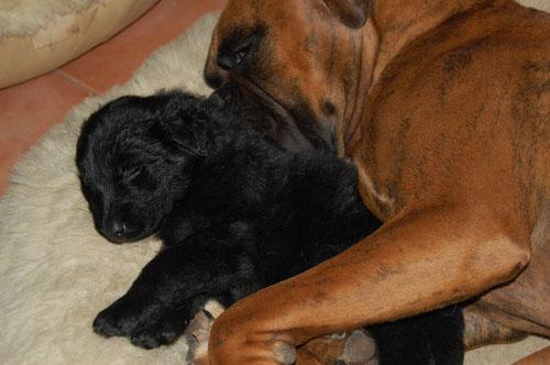 Bruno, die beste Ersatzmama und Vina Februar 2011