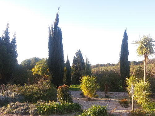 Cypresses a characteristic of the garden